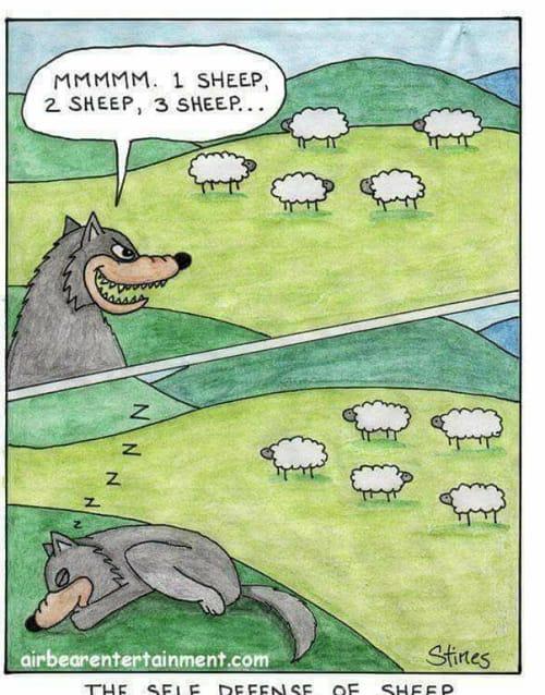 Sheep counting memes