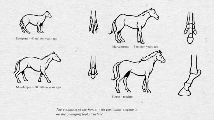 IELTS Process con ngựa